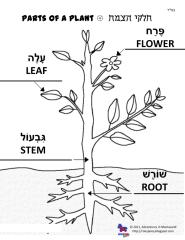Parts of a Plant Poster in Hebrew.pdf