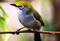 suara burung pleci ngalas (1).mp3